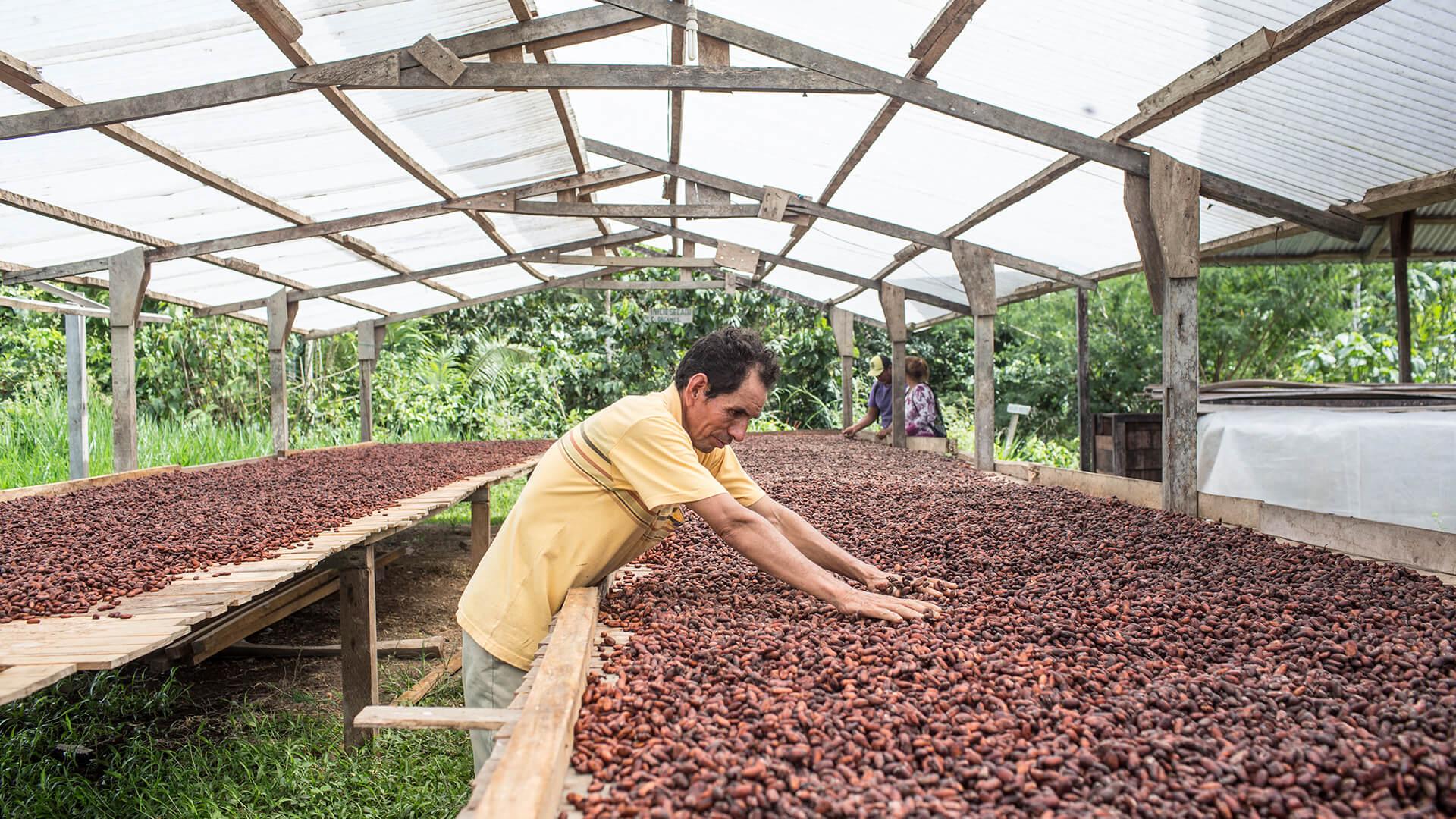 Von Kokabauern zu Kakaoexporteuren