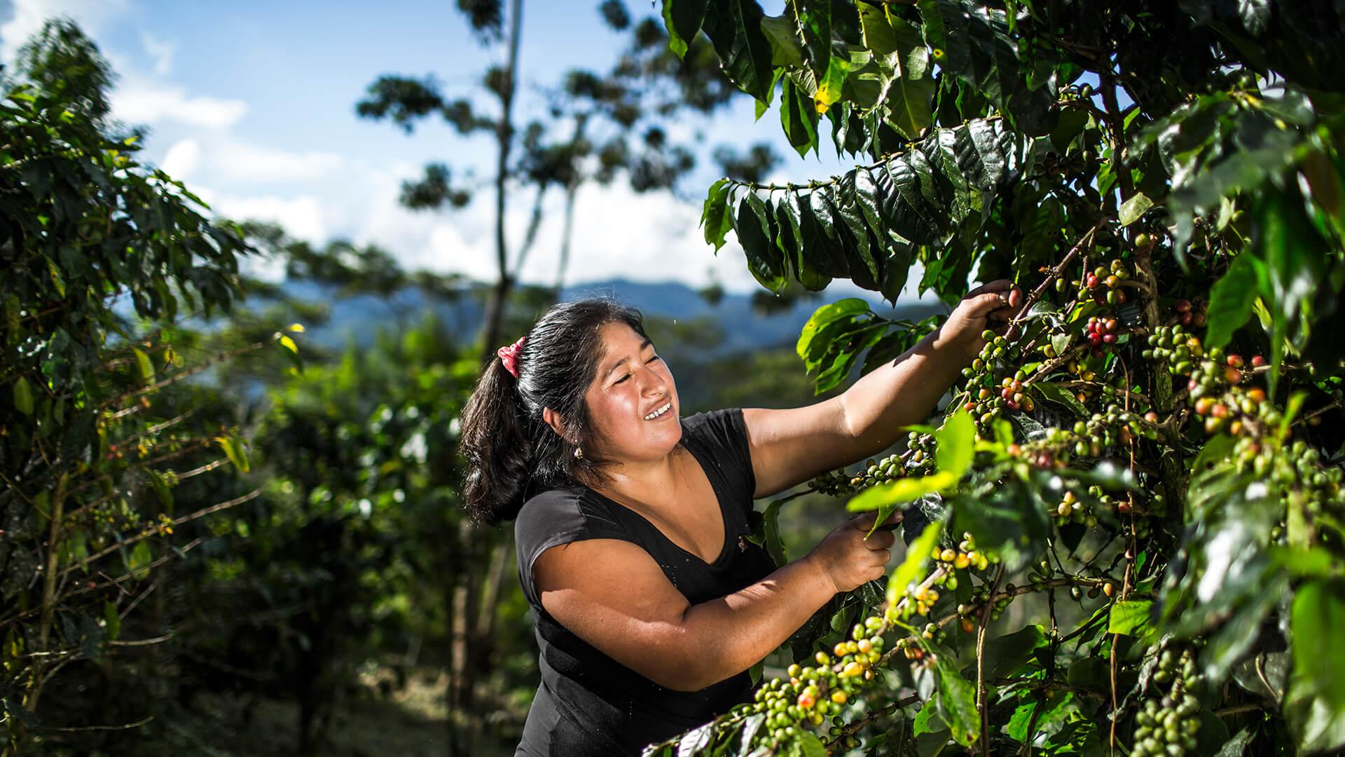 Kaffeebäuerin Moly Checya